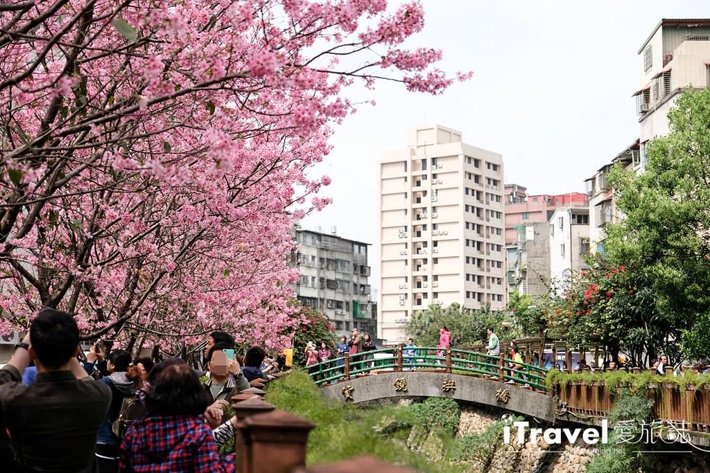 土城赏樱景点 希望之河左岸樱花 (16)