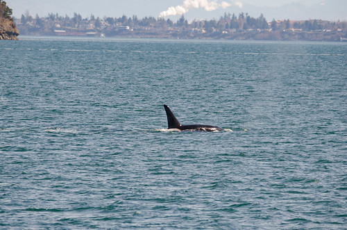 Whale Watching with Island Adventures-86