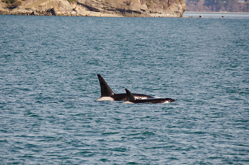 Whale Watching with Island Adventures-98