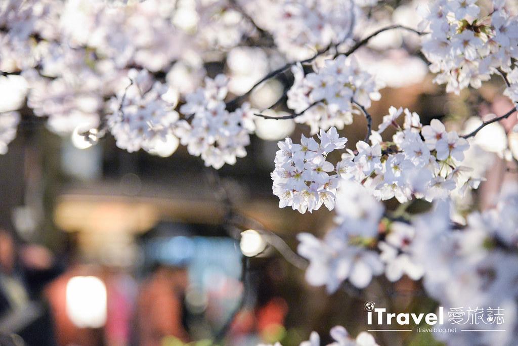 京都赏樱景点 祇园白川 (23)