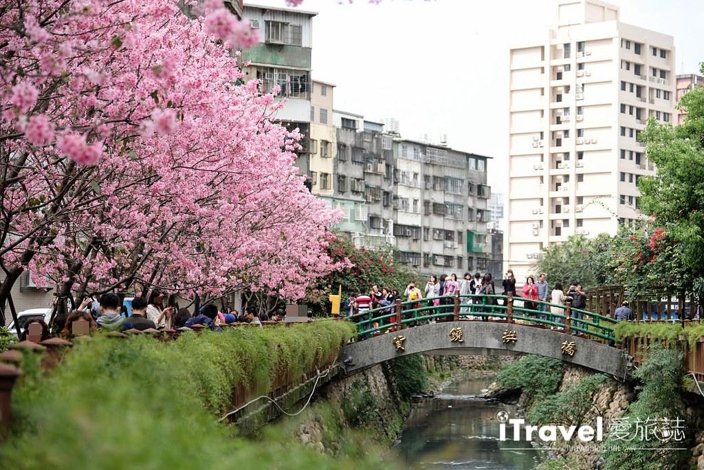 土城赏樱景点 希望之河左岸樱花 (8)