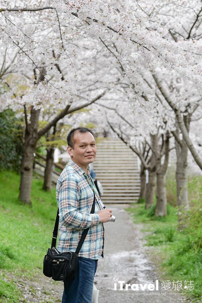 京都赏樱景点 伏见十石舟 (49)