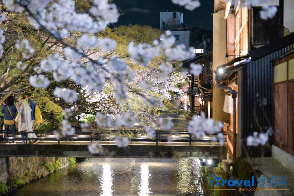 京都赏樱景点 祇园白川 (1)