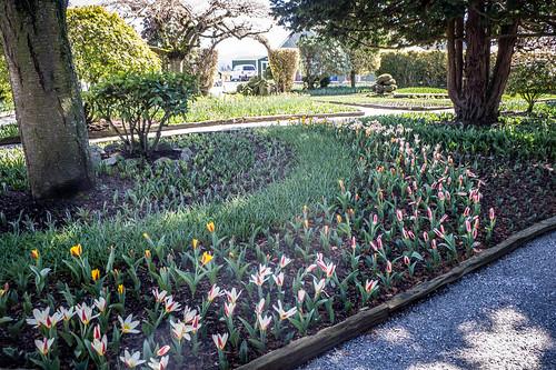Roosengarde Gardens-008