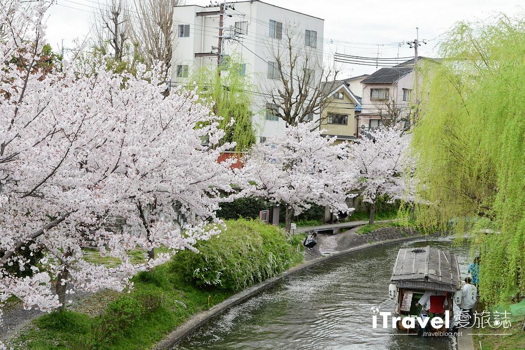 京都赏樱景点 伏见十石舟 (6)