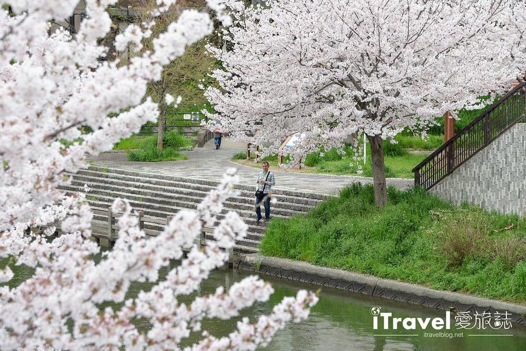 京都赏樱景点 伏见十石舟 (52)