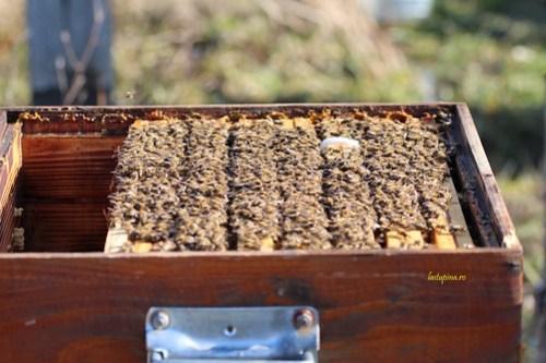 Albinele de la Stupina.ro