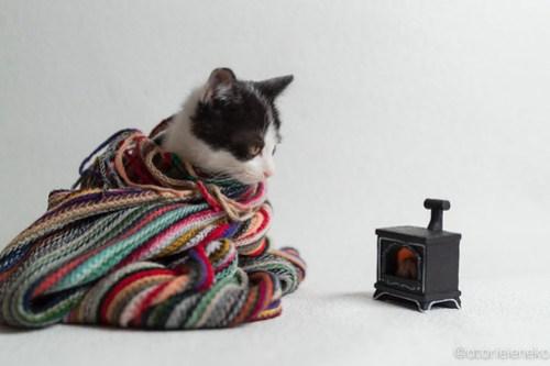 アトリエイエネコ Cat Photographer 44210793050_efb38463d6 1日1猫!ニャンとぴあキャッツ-冬編-里活中の元気くん♫ 1日1猫!  里親様募集中 里親募集 猫写真 猫カフェ 猫 子猫 大阪 初心者 写真 保護猫カフェ 保護猫 ハチワレ ニャンとぴあ スマホ サビ猫 キジ猫 カメラ おおさかねこ倶楽部 Kitten Cute cat