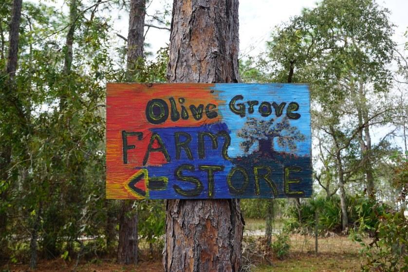 The Olive Grove, Brooksville, Fla., Nov. 11, 2018