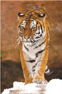NCERT Solutions for Class 9 English Main Course Book Unit 3 Environment Chapter 3 Save the Tiger 1
