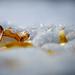 Mousse invernal con hojas de Otoño y bañada en luz dorada...