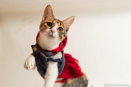 アトリエイエネコ Cat Photographer 31189136777_f8324f65e0 1日1猫!おおさかねこ倶楽部 里活中のネールちゃん♪ 1日1猫!  里親募集 茶トラ 猫写真 猫カフェ 猫 子猫 写真 保護猫カフェ 保護猫 ハチワレ ニャンとぴあ サビ猫 キジ猫 カメラ おおさかねこ倶楽部 photo Kitten Cute cat