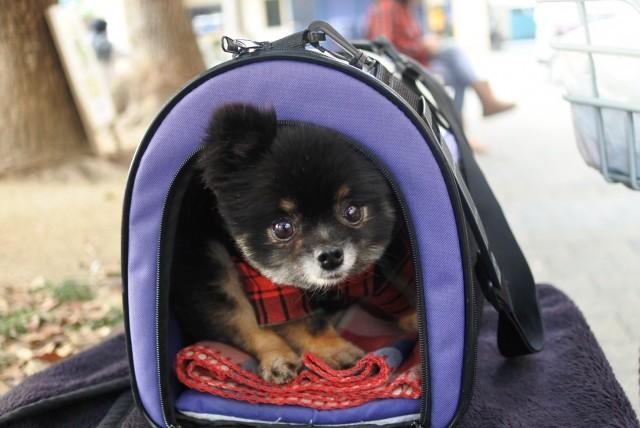 長距離ドライブに備えて練習をする犬