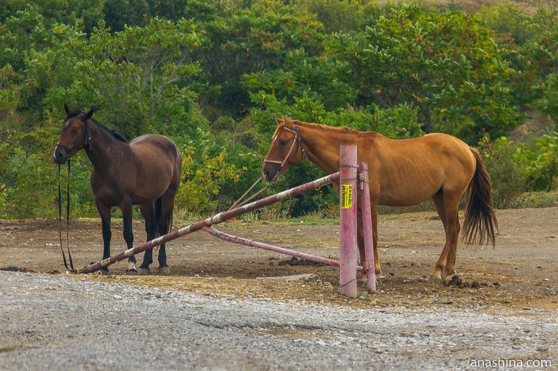 Лошади у дороги, Крым
