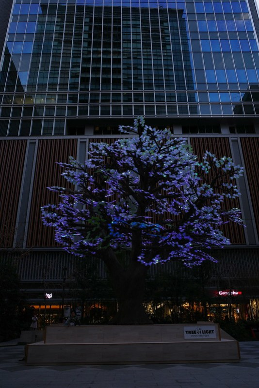 The Tree of Light - 灯桜 - 03 RICOH GR 97