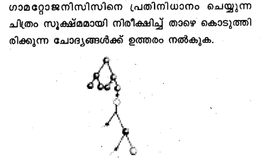 Plus Two Zoology Model Question Papers Paper 5.25