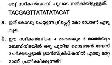 Plus Two Zoology Model Question Papers Paper 3.11