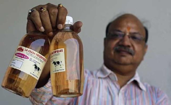 Why Do Hindus Drink Cow Urine Life In Saudi Arabia