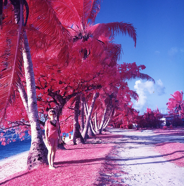 Red Palms