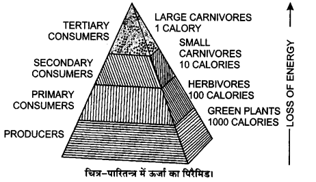 UP Board Solutions for Class 12 Biology Chapter 14 Ecosystem Q.12.2