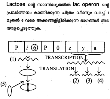 Plus Two Zoology Model Question Papers Paper 5.18