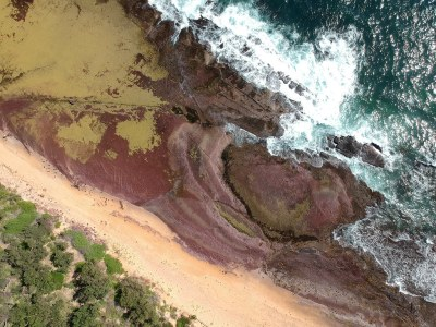 Chocolate Shale - Long Reef #marineexplorer