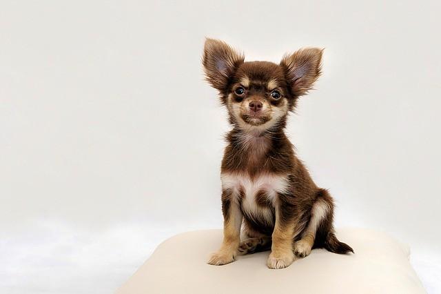キシリトールを含むお菓子を食べると危険な犬