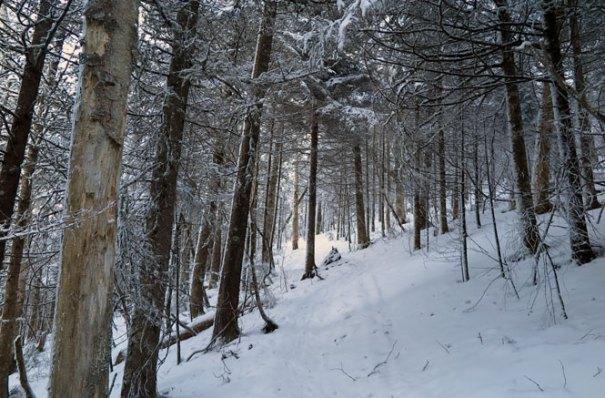 Mt. Starr King Trail Winter Hike