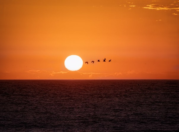 Flying close to the sun