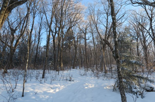 Starr King Trail Winter Hike Hardwoods
