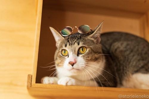 アトリエイエネコ Cat Photographer 45216775965_b14776f715 1日1猫!おおさかねこ倶楽部 里活中のドラくん♪ 1日1猫!  黒猫 里親募集 茶トラ 猫写真 猫カフェ 猫 子猫 保護猫カフェ 保護猫 ハチワレ ニャンとぴあ サビ猫 キジ猫 カメラ おおさかねこ倶楽部 Kitten Cute cat