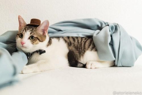 アトリエイエネコ Cat Photographer 45404386514_cec708556b 1日1猫!おおさかねこ倶楽部 里活中のカイくん♪ 1日1猫!  里親募集 茶トラ 猫写真 猫カフェ 猫 子猫 写真 保護猫カフェ 保護猫 ハチワレ ニャンとぴあ サビ猫 キジ猫 カメラ おおさかねこ倶楽部 Kitten Cute cat