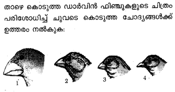 Plus Two Zoology Previous Year Question Papers and Answers 2017.12