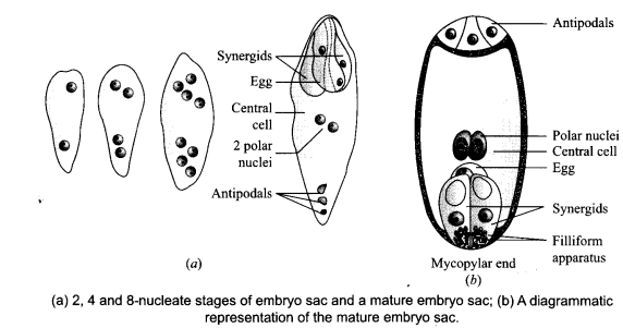 CBSE Sample Papers for Class 12 Biology Paper 7.5