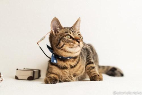 アトリエイエネコ Cat Photographer 46128206731_2b034258e4 1日1猫!おおさかねこ倶楽部 里活中のおうくん♪ 1日1猫!  里親募集 茶トラ 猫写真 猫カフェ 猫 子猫 写真 保護猫カフェ 保護猫 ハチワレ ニャンとぴあ サビ猫 キジ猫 カメラ おおさかねこ倶楽部 Kitten Cute cat
