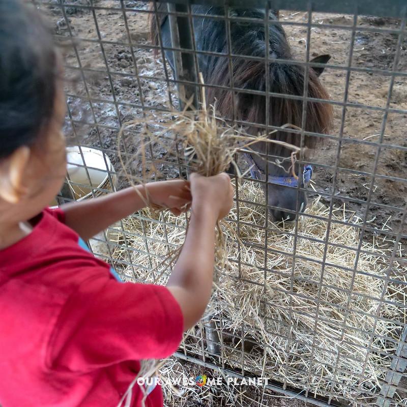 Yoki's Farm 2019-90.jpg