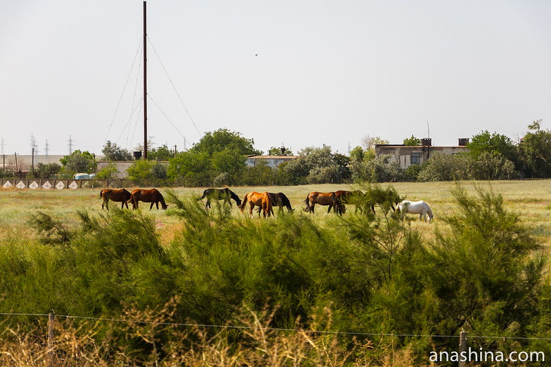 Лошади, Крым