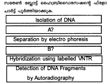 Plus Two Zoology Model Question Papers Paper 1.11
