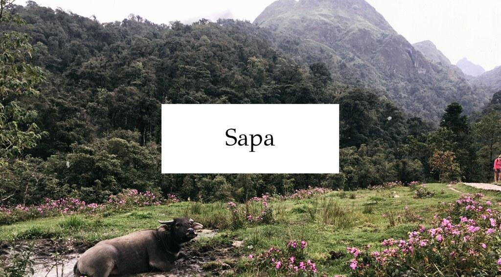 sapa cover