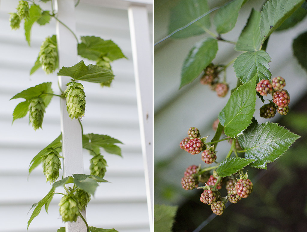 garden 2018 collage 2