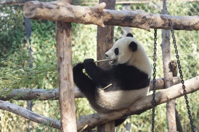 2-year-old Tian Bao (天宝) 2018-10-14