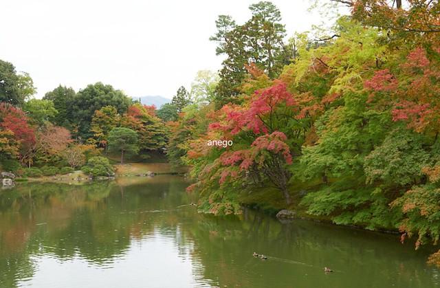 仙洞御所 池
