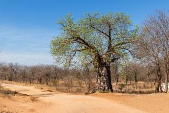 Na een visum voor Lucía voor Namibië te hebben gescoord gingen we op weg naar het Lower Zambezi National Park.