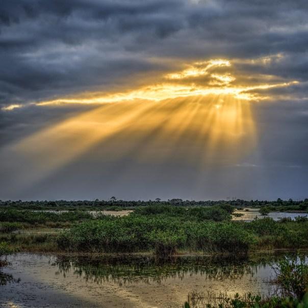 Sunbeams in the swamp