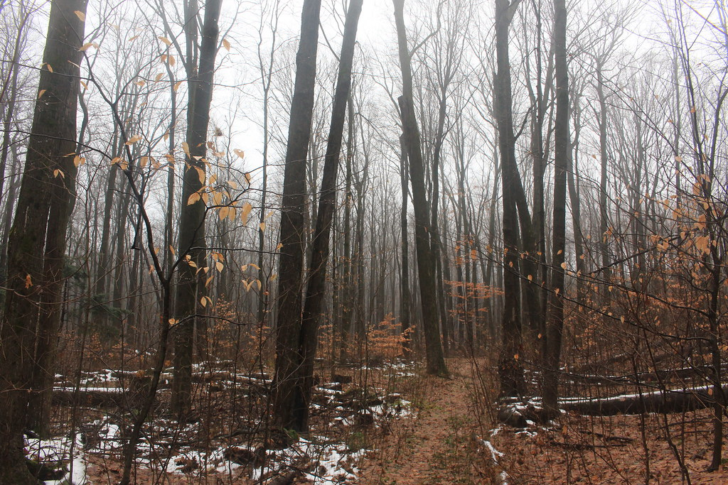 Happy Valley Forest