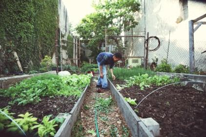 Farm 51 Junior Gardener RaZion!