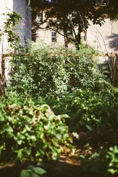 White cherry tomatoes