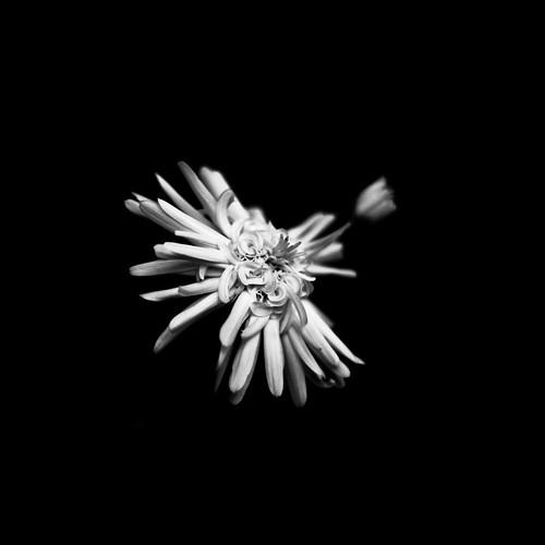 daisy by Matt Hovey