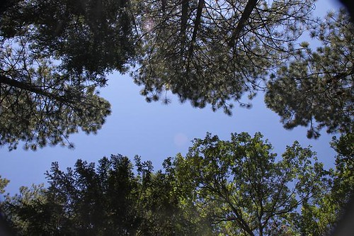 Donner Pass Campground looking up thru trees