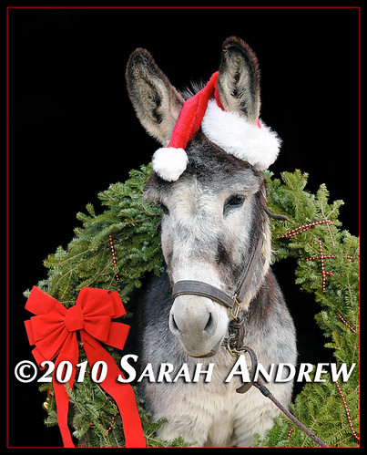 Jefferson the Christmas Donkey